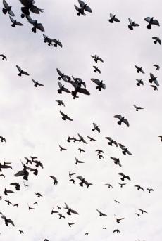 birds-2247864-e1502551356470.jpg