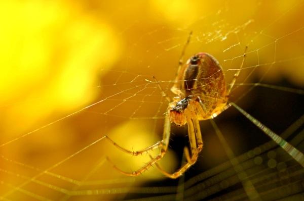 spider-2373755